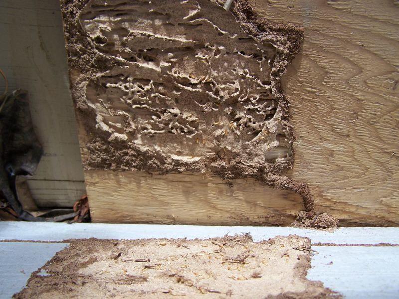 formosan termite wood damage