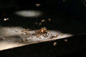 termites and alates on wood