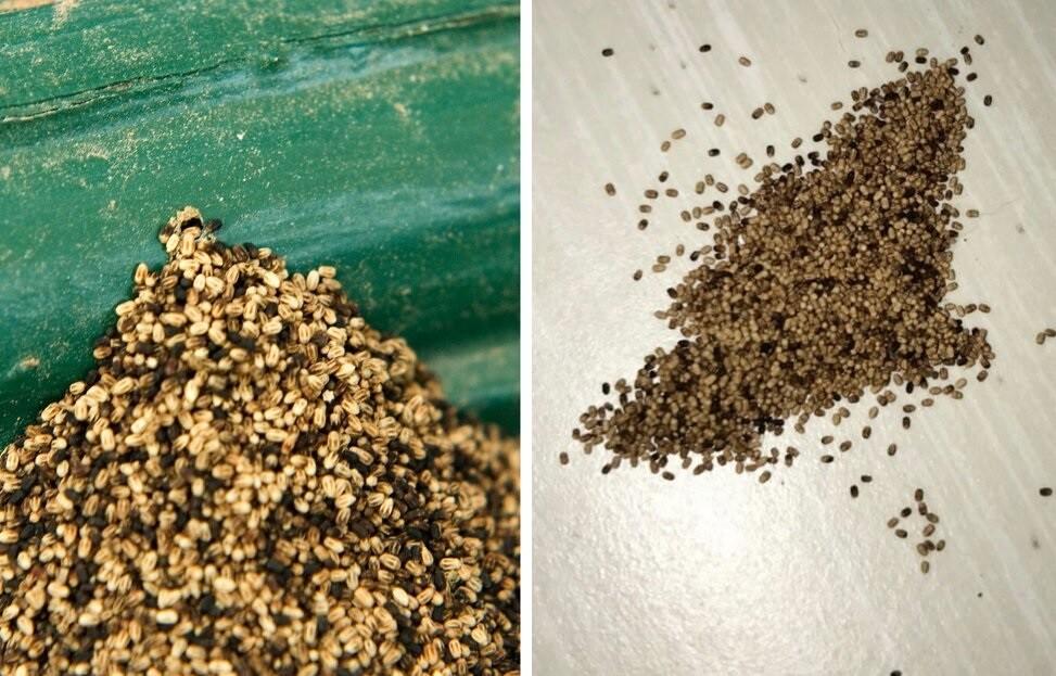 termite pellets